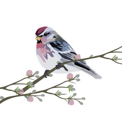 Vector Beautiful Spring Watercolor Bird sitting on a tree branch with blooming flower.