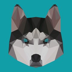 Abstract geometric polygonal husky portrait