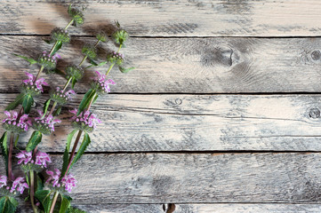 Summer wildflowers on wooden background. Photo for design card.