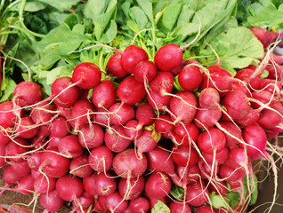 Red radish on market.