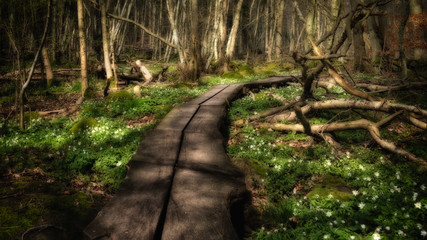 Wooden pathway through forest