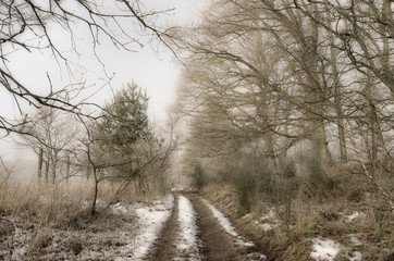 Dirt track through winter landscape