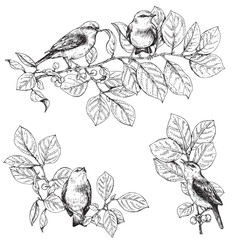 Birds  sitting on branches sketch