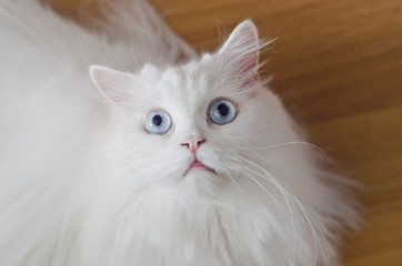 Cat scared