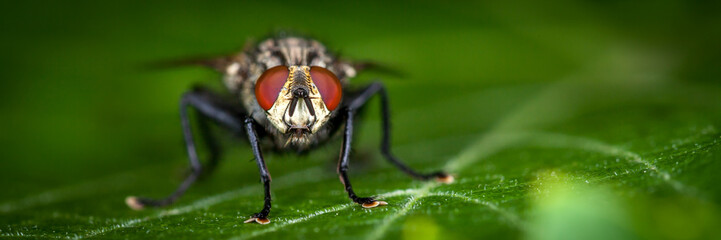 Large house fly on a leaf