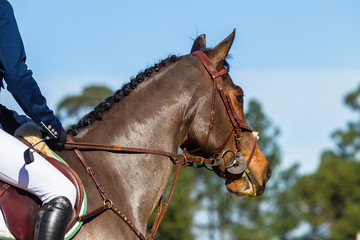 Rider Horse closeup unidentified show jumping equestrian.