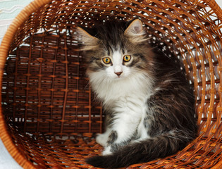 Kitten hiding in a basket