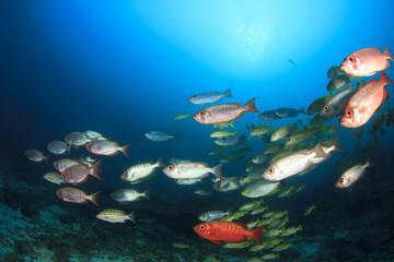 Tropical fish, coral reef, underwater sea ocean