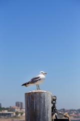 seagull stand on wooden post