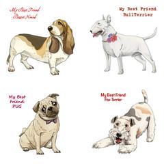 dog breeds set basset hound, bull terrier, fox terrier, pug
