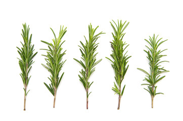 set of fresh rosemary on a white background