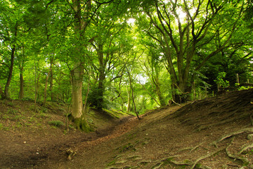 View through English woodland in the summer