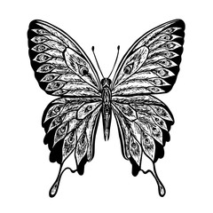 Vector butterfly. Black and white butterfly. Butterfly Papilio b