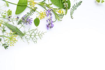 variety of fresh herbs on white background