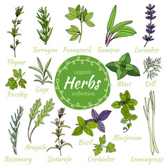 Vector collection of herbs.