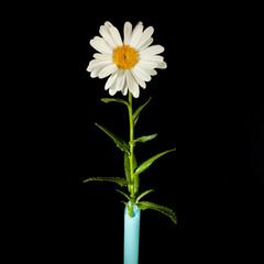 Fleurs photographies en studio