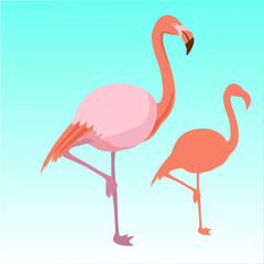 Pink flamingo bird  silhouette vector illustration