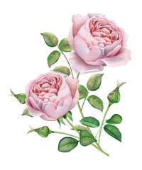 Watercolor flowers. Pink roses