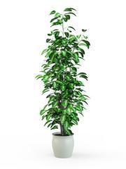 Fototapeta Green potted plant isolated on white background. 3D Rendering, 3D Illustration. obraz