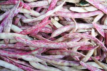 Fresh red haricot or  cranberry bean pods