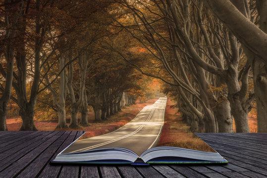 Beautiful surreal alternate colored forest landscape