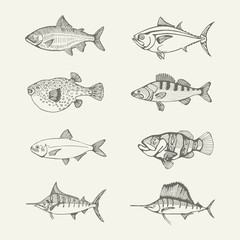 sea fish set. drawings