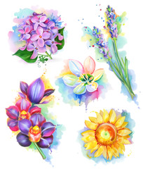 Beautiful flowers, watercolor painting, mesh vector icon set