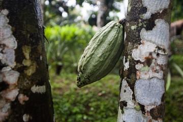 Holiday in Bali, Indonesia - Coffee & Chocolate Plantation