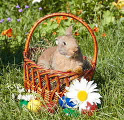 Blond rabbit sit in the Easter basket. Flowers and colored eggs