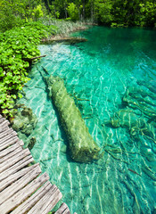 Wall Mural - Nice small lake in  Croatian national park Plitvice Lakes with submerged trunk