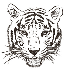 Original artwork tiger with dark stripes, isolated on white background, and sepia color version, outline polka dot llustration. Vector