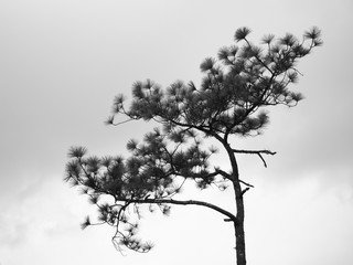 abstract of black and white photo of lonely isolated tree branches and sky background