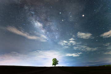 Lonely tree under the starry night sky and the milky way on above.