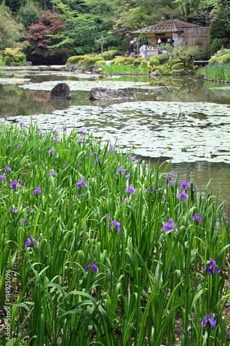 Jardin Japonais D Iris Et Nenuphars A Kyoto Japon Stock Photo And