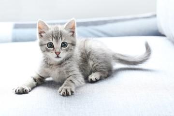 Piękny mały kot na szarej kanapie