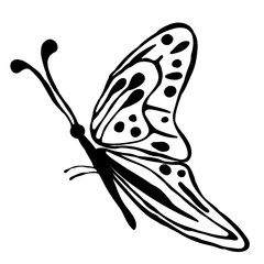 Vector illustration of insect. Cute hand drawn black butterfly isolated on the white background. Inc painting. Series of Animals and Insect Illustration.