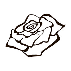 Vector illustration of flower. Hand drawn black rose  isolated on the white background. Inc painting.