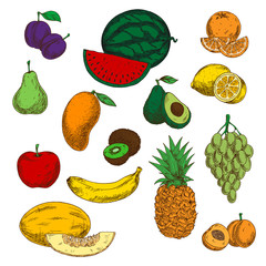 Assortment of ripe and sweet fruits sketches