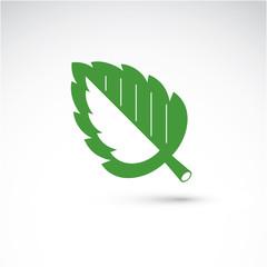Spring hazel tree leaf, botany and eco flat image. Vector illust