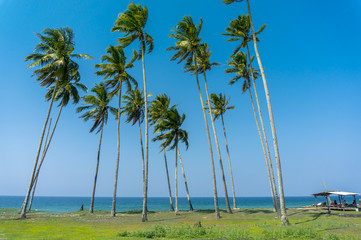 seascape and coconut tree