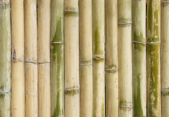 bamboo fence wall texture background