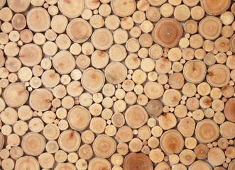 tree stumps background