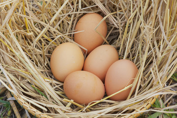 Horizontal photo of several hen eggs which are placed on nice haystack from dried straws and inside wicker basket. Light wooden wall is in background..