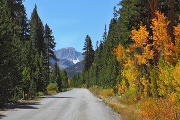 The asphalt road andl autumn foliage.