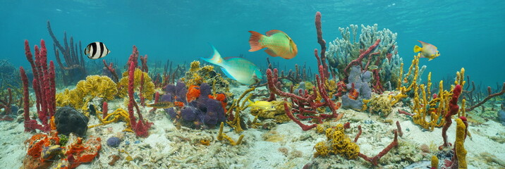 Underwater panorama, seabed with colorful marine life composed by sea sponges, corals and tropical fish, Caribbean sea