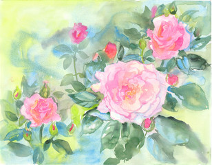 Abstract watercolor summer roses flowers illustration. Bright colors. Hand painted. The unusual shape.