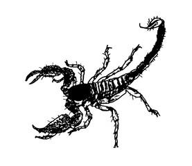 skorpion illustration design