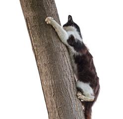 playful cat climbing tree on white background