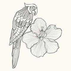 Parrot exotic bird with flower hibiscus.