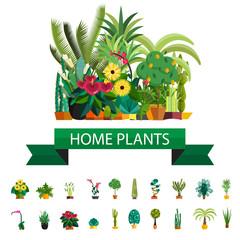 Florist shop.Plants composition.Flower store flat design.